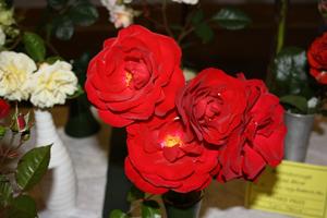 Rose-show